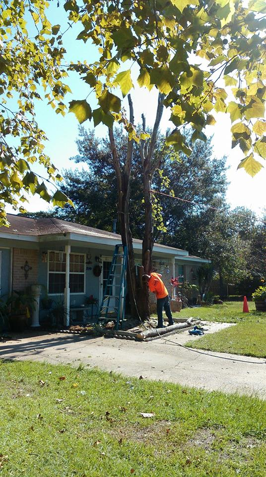 T & D Professional Tree Removal